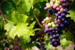 Growing, Making, and Improving WinesWorkshop