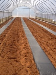 Season Extension and Commercial Strawberry Production FieldDay